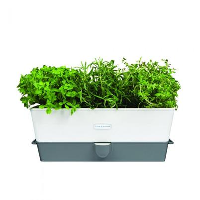 Cole & Mason Self-Watering Herb Keeper Triple Potted
