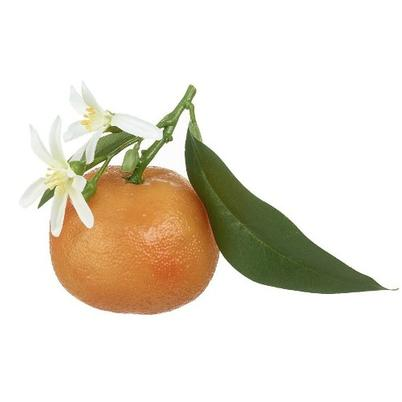 Decorative Orange with White Blossom